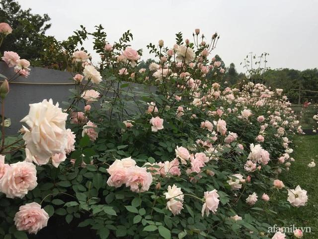 Cuộc sống an yên trong ngôi nhà có vườn hoa hồng quanh năm tỏa hương sắc của gia đình 3 thế hệ ở Ba Vì, Hà Nội - Ảnh 9.