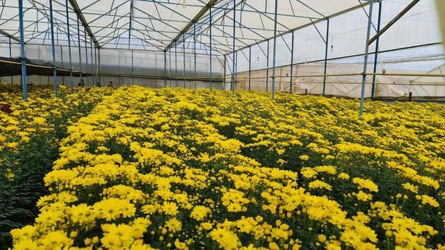 Hàng chục triệu cành hoa Tết Đoan Ngọ ở Đà Lạt 'tắc' đầu ra - Ảnh 1.