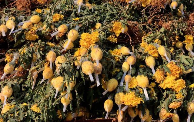 Hàng chục triệu cành hoa Tết Đoan Ngọ ở Đà Lạt 'tắc' đầu ra - Ảnh 2.