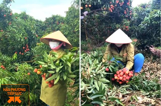 Một nông dân Bắc Giang livestream 10 phút bán 2 tấn vải thiều - Ảnh 2.