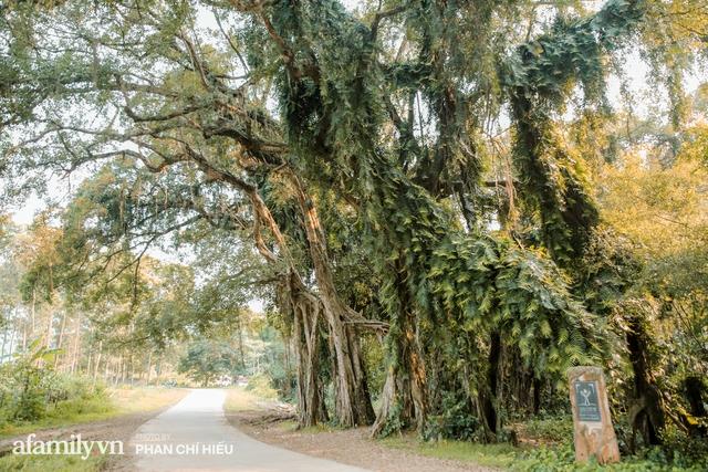 Ngôi làng độc nhất Việt Nam sở hữu CHIẾC CỔNG CÒN SỐNG SUỐT 800 NĂM, được công nhận là di sản và là bối cảnh của không biết bao nhiêu bộ phim đình đám  - Ảnh 3.