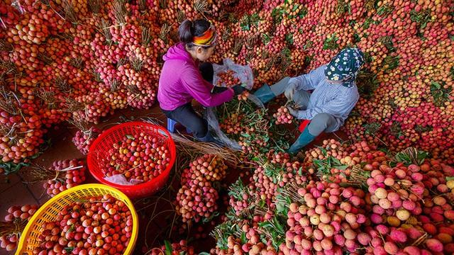 Một nông dân Bắc Giang livestream 10 phút bán 2 tấn vải thiều - Ảnh 4.