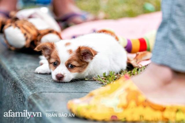 Cụ ông câm điếc cưu mang chú chó nhỏ, thà rong ruổi bán từng tờ vé số chứ không nhận 70 triệu khi người Sài Gòn dang tay giúp đỡ  - Ảnh 10.