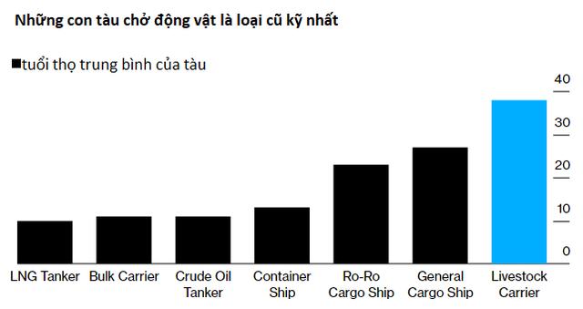 1.800 con bò bị bỏ đói trên biển và chịu kết cục thảm: Hồi chuông cảnh tỉnh về ngành công nghiệp buôn động vật sống quy mô 18 tỷ USD - Ảnh 2.