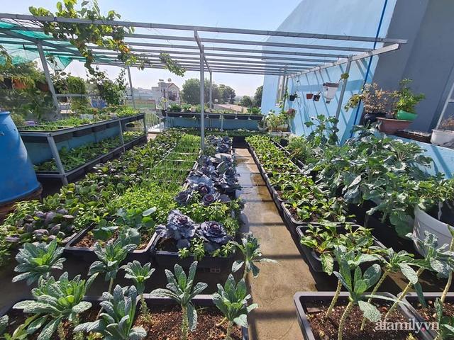 Sự quy củ đến bất ngờ của khu vườn sân thượng với trăm loại rau sạch xanh mát ở Bình Dương - Ảnh 1.