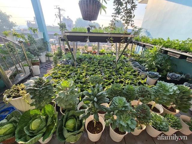 Sự quy củ đến bất ngờ của khu vườn sân thượng với trăm loại rau sạch xanh mát ở Bình Dương - Ảnh 2.