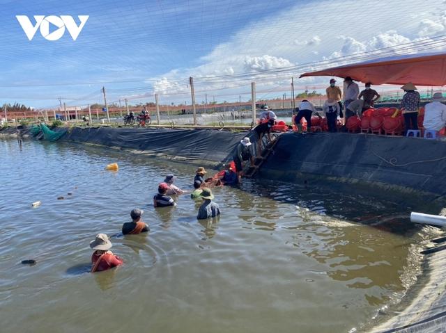 """Lo ngại dịch Covid-19 bùng phát, ngư dân Tiền Giang thu hoạch tôm ồ ạt, """"cung vượt cầu - Ảnh 2."""