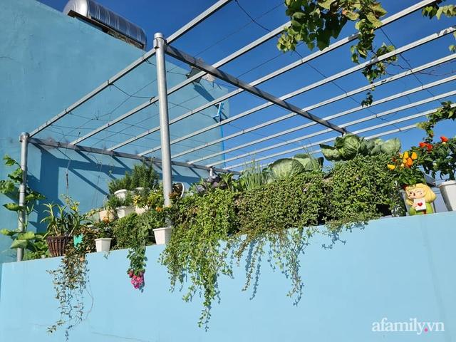 Sự quy củ đến bất ngờ của khu vườn sân thượng với trăm loại rau sạch xanh mát ở Bình Dương - Ảnh 11.
