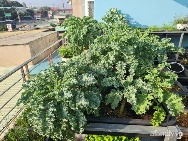 Sự quy củ đến bất ngờ của khu vườn sân thượng với trăm loại rau sạch xanh mát ở Bình Dương - Ảnh 12.