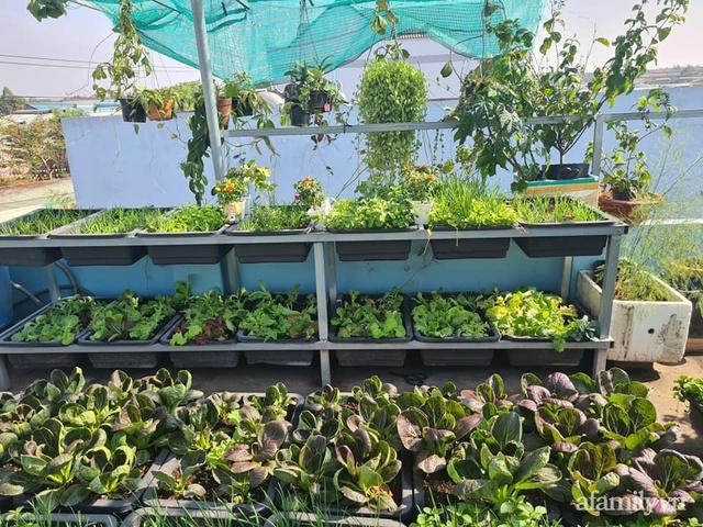 Sự quy củ đến bất ngờ của khu vườn sân thượng với trăm loại rau sạch xanh mát ở Bình Dương - Ảnh 16.