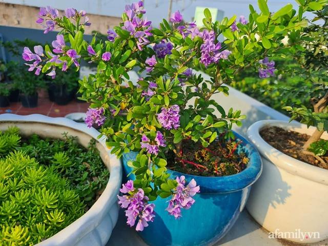 Sự quy củ đến bất ngờ của khu vườn sân thượng với trăm loại rau sạch xanh mát ở Bình Dương - Ảnh 18.
