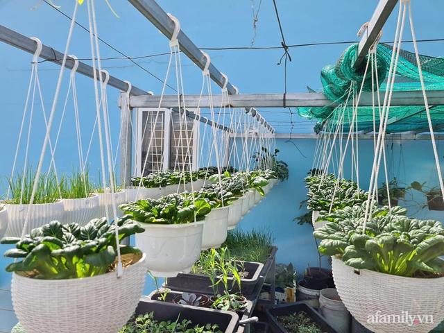 Sự quy củ đến bất ngờ của khu vườn sân thượng với trăm loại rau sạch xanh mát ở Bình Dương - Ảnh 20.