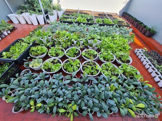 Sự quy củ đến bất ngờ của khu vườn sân thượng với trăm loại rau sạch xanh mát ở Bình Dương - Ảnh 3.