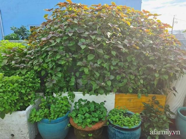 Sự quy củ đến bất ngờ của khu vườn sân thượng với trăm loại rau sạch xanh mát ở Bình Dương - Ảnh 21.