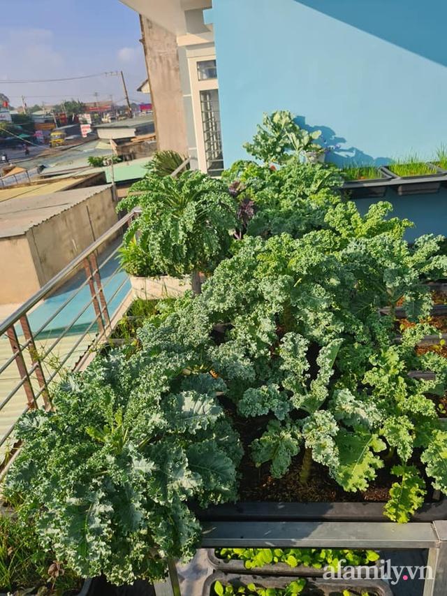 Sự quy củ đến bất ngờ của khu vườn sân thượng với trăm loại rau sạch xanh mát ở Bình Dương - Ảnh 23.