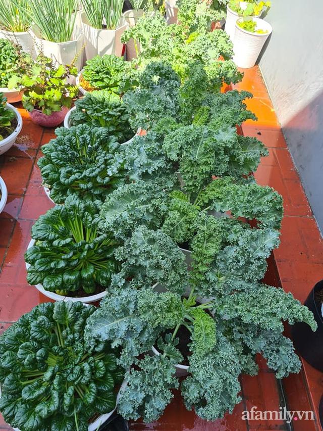 Sự quy củ đến bất ngờ của khu vườn sân thượng với trăm loại rau sạch xanh mát ở Bình Dương - Ảnh 25.