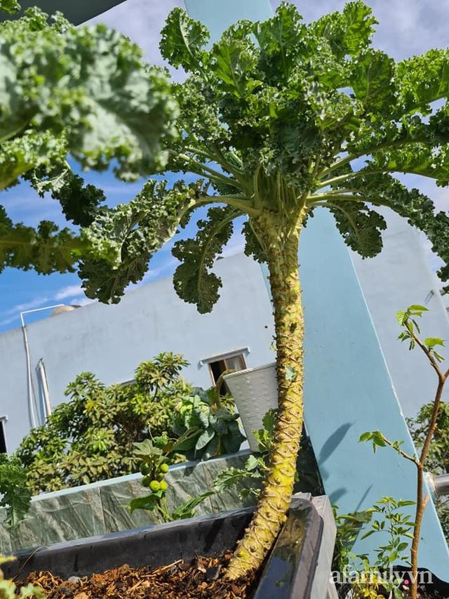 Sự quy củ đến bất ngờ của khu vườn sân thượng với trăm loại rau sạch xanh mát ở Bình Dương - Ảnh 29.