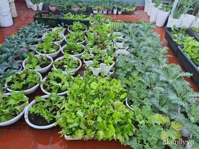 Sự quy củ đến bất ngờ của khu vườn sân thượng với trăm loại rau sạch xanh mát ở Bình Dương - Ảnh 5.