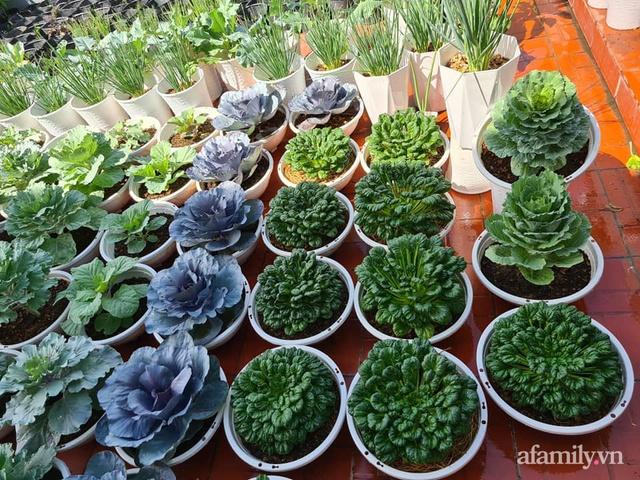 Sự quy củ đến bất ngờ của khu vườn sân thượng với trăm loại rau sạch xanh mát ở Bình Dương - Ảnh 6.