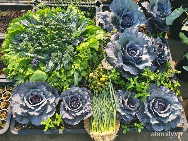Sự quy củ đến bất ngờ của khu vườn sân thượng với trăm loại rau sạch xanh mát ở Bình Dương - Ảnh 7.