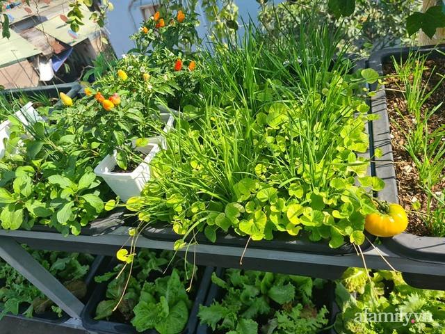 Sự quy củ đến bất ngờ của khu vườn sân thượng với trăm loại rau sạch xanh mát ở Bình Dương - Ảnh 8.