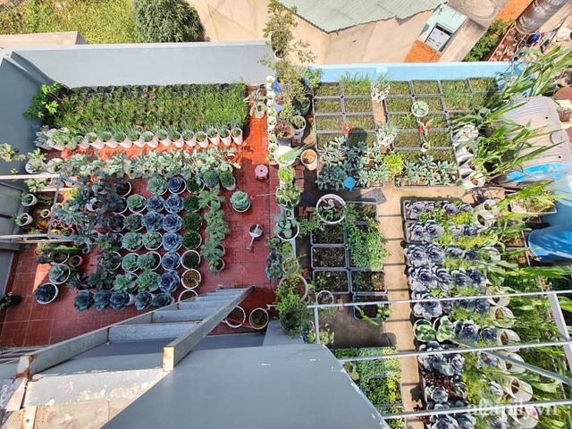 Sự quy củ đến bất ngờ của khu vườn sân thượng với trăm loại rau sạch xanh mát ở Bình Dương - Ảnh 9.