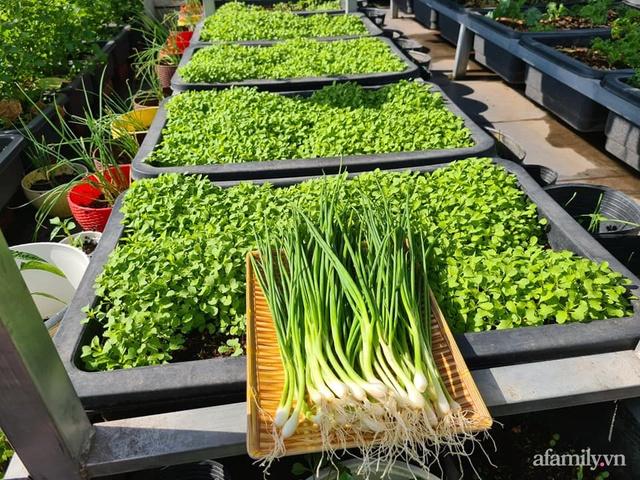 Sự quy củ đến bất ngờ của khu vườn sân thượng với trăm loại rau sạch xanh mát ở Bình Dương - Ảnh 10.