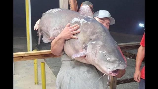 Người đàn ông câu được con cá trê xanh nặng hơn nửa tạ - Ảnh 1.