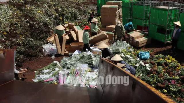 Hàng vạn cành hoa Đà Lạt xuất khẩu sang Úc buộc phải tiêu hủy - Ảnh 3.