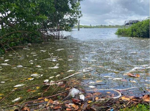 Mỹ: Thủy triều đỏ dữ dội làm chết 600 tấn cá ở bang Florida - Ảnh 1.
