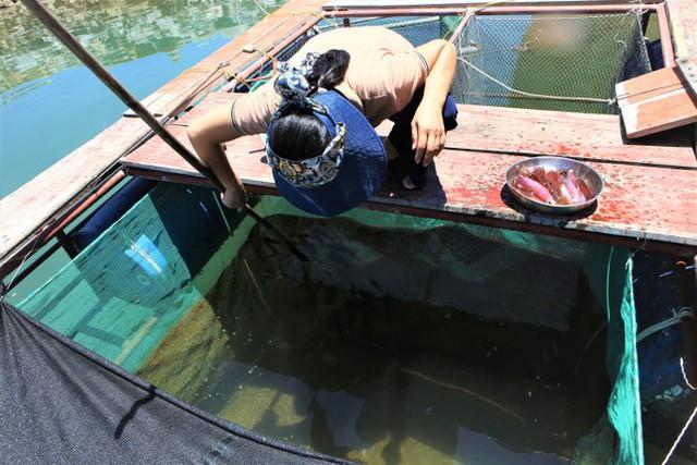 Phố mực nhảy đìu hiu mùa dịch - Ảnh 5.