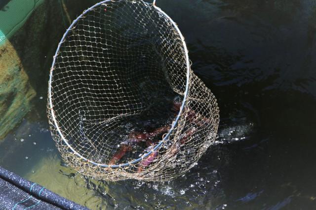 Phố mực nhảy đìu hiu mùa dịch - Ảnh 7.