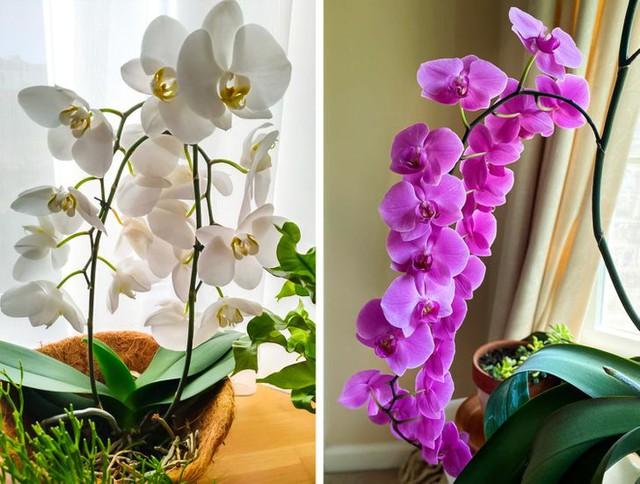 9 loại cây cảnh trồng trong phòng giúp bạn có giấc ngủ ngon hơn - Ảnh 4.
