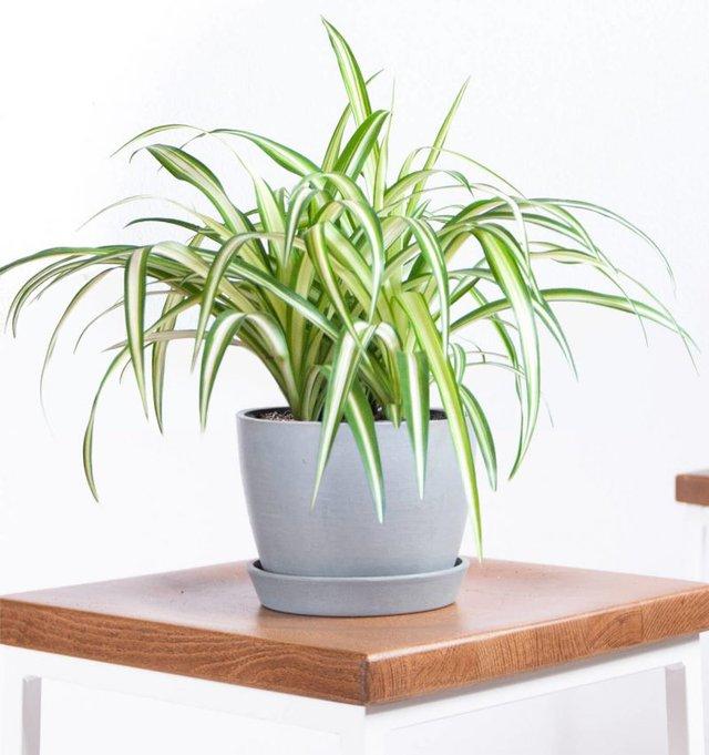 9 loại cây cảnh trồng trong phòng giúp bạn có giấc ngủ ngon hơn - Ảnh 1.