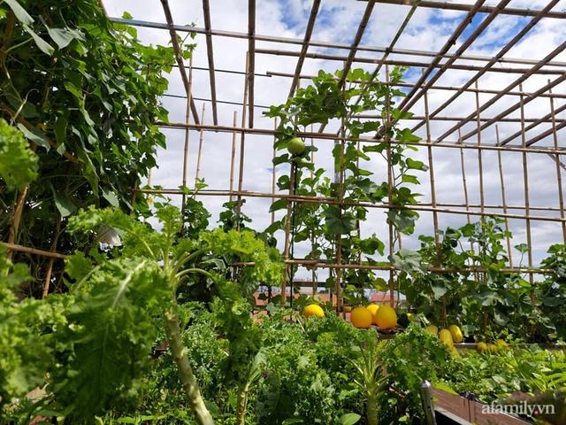 Sân thượng 50m² không khác gì trang trại với đủ loại rau quả sạch theo mùa của mẹ đảm ở Hà Nội - Ảnh 1.