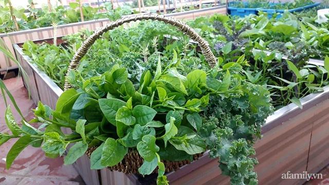 Sân thượng 50m² không khác gì trang trại với đủ loại rau quả sạch theo mùa của mẹ đảm ở Hà Nội - Ảnh 13.