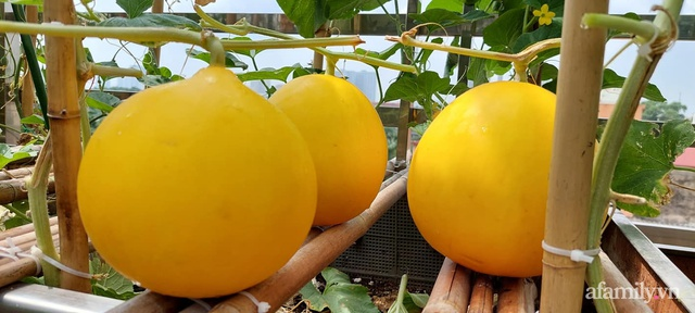 Sân thượng 50m² không khác gì trang trại với đủ loại rau quả sạch theo mùa của mẹ đảm ở Hà Nội - Ảnh 16.