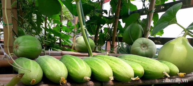 Sân thượng 50m² không khác gì trang trại với đủ loại rau quả sạch theo mùa của mẹ đảm ở Hà Nội - Ảnh 17.