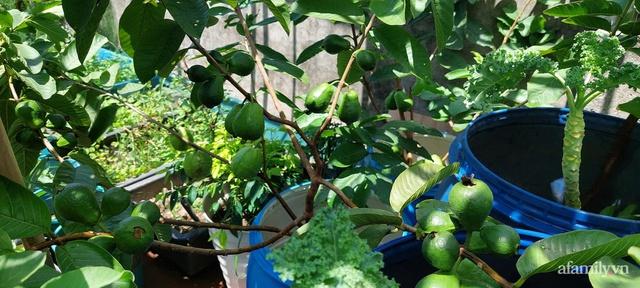 Sân thượng 50m² không khác gì trang trại với đủ loại rau quả sạch theo mùa của mẹ đảm ở Hà Nội - Ảnh 19.