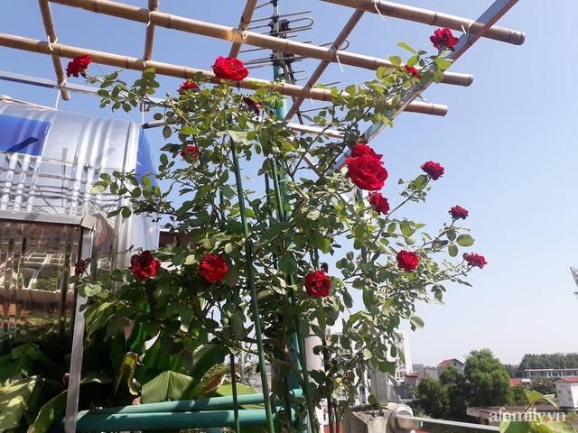 Sân thượng 50m² không khác gì trang trại với đủ loại rau quả sạch theo mùa của mẹ đảm ở Hà Nội - Ảnh 3.