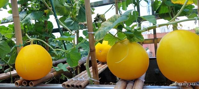 Sân thượng 50m² không khác gì trang trại với đủ loại rau quả sạch theo mùa của mẹ đảm ở Hà Nội - Ảnh 21.