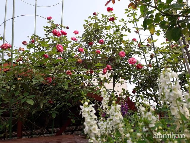 Sân thượng 50m² không khác gì trang trại với đủ loại rau quả sạch theo mùa của mẹ đảm ở Hà Nội - Ảnh 28.