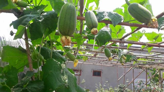 Sân thượng 50m² không khác gì trang trại với đủ loại rau quả sạch theo mùa của mẹ đảm ở Hà Nội - Ảnh 4.