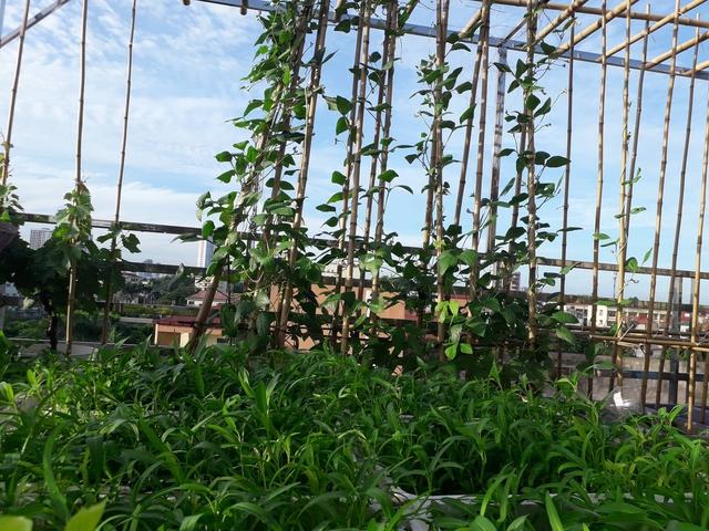 Sân thượng 50m² không khác gì trang trại với đủ loại rau quả sạch theo mùa của mẹ đảm ở Hà Nội - Ảnh 5.