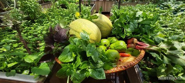 Sân thượng 50m² không khác gì trang trại với đủ loại rau quả sạch theo mùa của mẹ đảm ở Hà Nội - Ảnh 6.