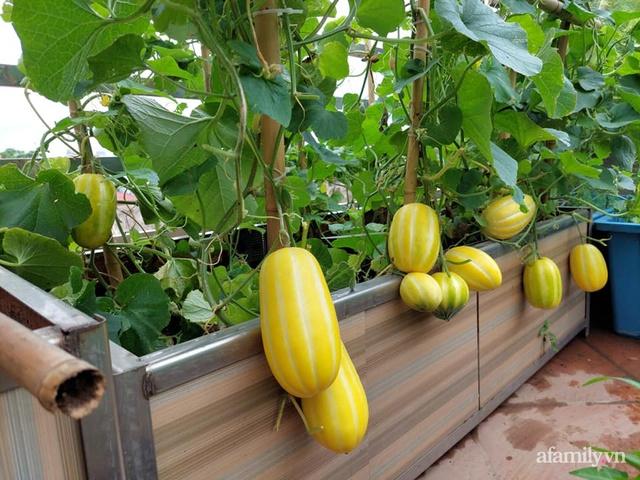 Sân thượng 50m² không khác gì trang trại với đủ loại rau quả sạch theo mùa của mẹ đảm ở Hà Nội - Ảnh 8.