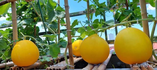 Sân thượng 50m² không khác gì trang trại với đủ loại rau quả sạch theo mùa của mẹ đảm ở Hà Nội - Ảnh 9.