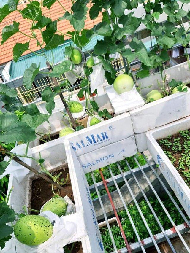 Khu vườn trên sân thượng đầy ắp rau quả xanh mướt ngay ở Hà Nội khiến ai cũng ước ao: Mùa nào thức nấy, rau xanh quả ngọt lại đảm bảo sạch sẽ! - Ảnh 5.