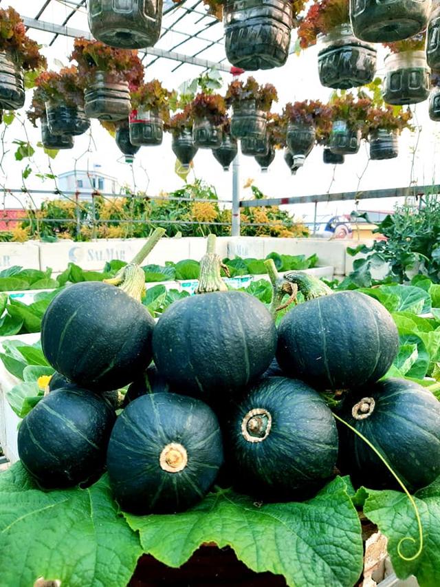Khu vườn trên sân thượng đầy ắp rau quả xanh mướt ngay ở Hà Nội khiến ai cũng ước ao: Mùa nào thức nấy, rau xanh quả ngọt lại đảm bảo sạch sẽ! - Ảnh 6.