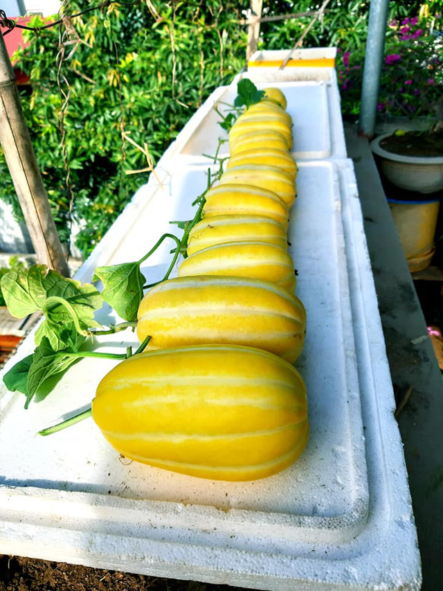 Khu vườn trên sân thượng đầy ắp rau quả xanh mướt ngay ở Hà Nội khiến ai cũng ước ao: Mùa nào thức nấy, rau xanh quả ngọt lại đảm bảo sạch sẽ! - Ảnh 10.